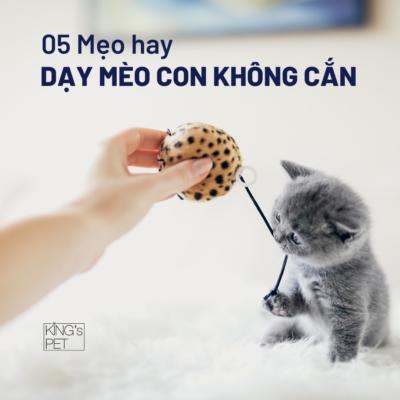 05 Mẹo hay dạy mèo con không cắn